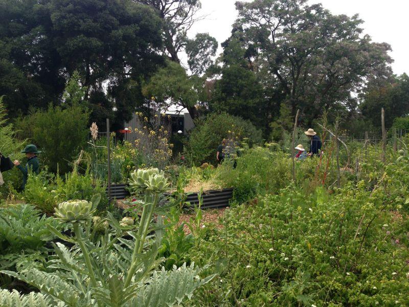 Geelong College Yr 4 Enviro Garden 2014